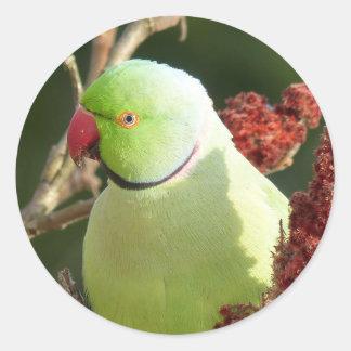 Rose-beringter Parakeet Runder Aufkleber