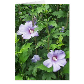 Rose der Sharon-Hibiskus-Blumen Karte