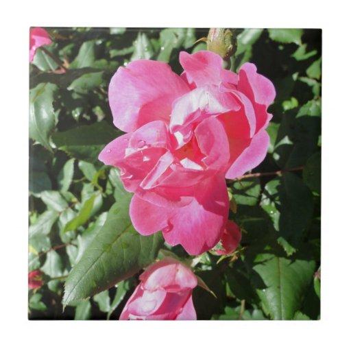 Rose des Rosas Fliesen