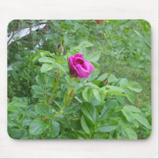 Rose durch Zaun Mousepads