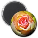 Rose - Für Dich Runder Magnet 5,1 Cm