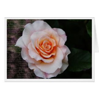 Rose Grußkarten