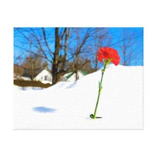Rose im Schnee Leinwanddruck