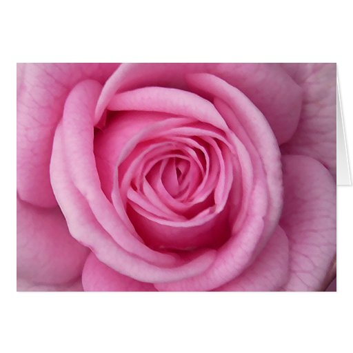 Rose kardiert rosa Blumen-kundenspezifische Gruß-K Grußkarte