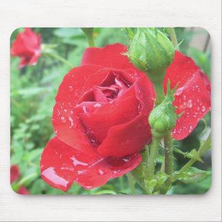 Rose nach einem Frühlingsregen Mousepad