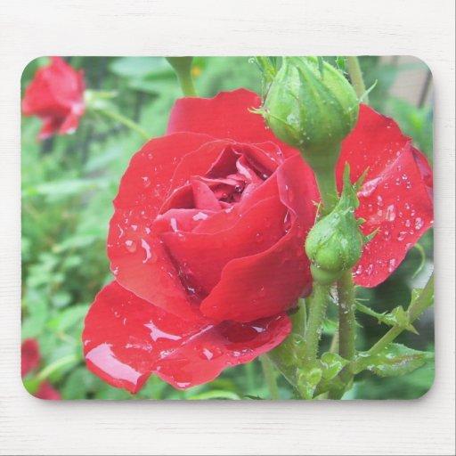 Rose nach einem Frühlingsregen Mauspad