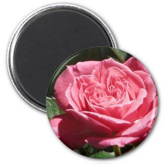 Rose, Rosa Runder Magnet 5,7 Cm