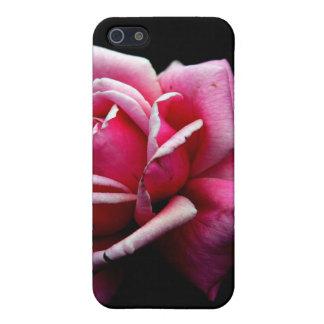 Rose Schutzhülle Fürs iPhone 5