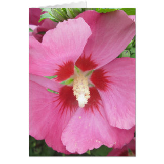 Rose Sharon rosarot Karte