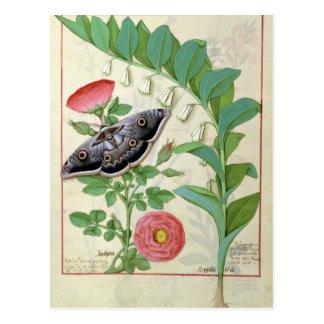Rose und Polygonatum Postkarte