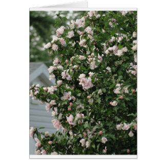 Rose von Sharon u. Petunien/erhalten gut Karte
