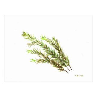 Rosemary-Krautküchenkunst-Wasserfarbemalerei Postkarten