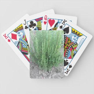 Rosemary-Pflanze im Garten. Toskana, Italien Bicycle Spielkarten