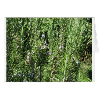 Rosemary-Pflanze Karte