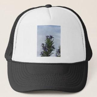 Rosemary-Pflanze mit Blumen gegen den Himmel Truckerkappe