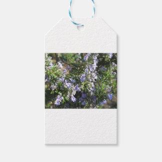 Rosemary-Pflanze mit Blumen in Toskana, Italien Geschenkanhänger