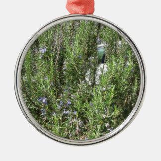 Rosemary-Pflanze mit Blumen. Toskana, Italien Silbernes Ornament