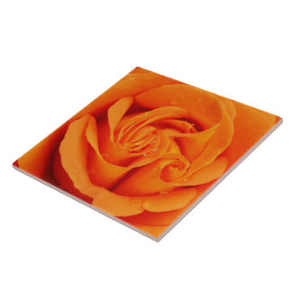 Rosen-Blumentrivet oder -kasten der Keramikfliese