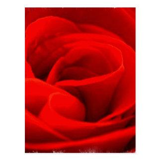 Rosen-Blüten-Postkarte Postkarte