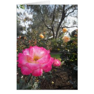 Rosen-Garten Karte