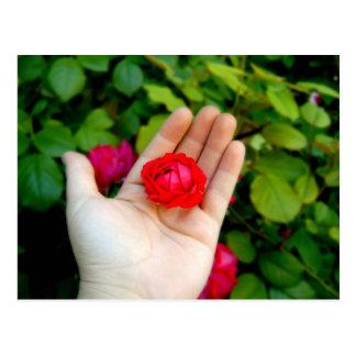 Rosen-in der Hand Postkarte