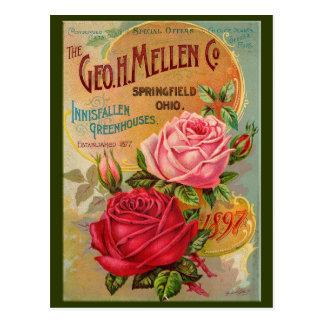 Rosen-Katalog Postkarte