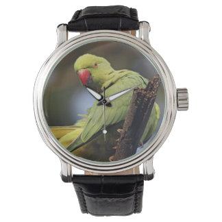 Roseringed Parakeet, Keoladeo Nationalpark, Armbanduhr
