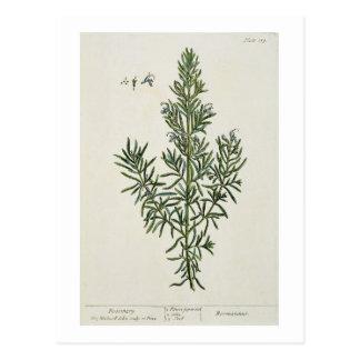 """Rosmarinus Officinalis, von """"einem neugierigen Postkarte"""