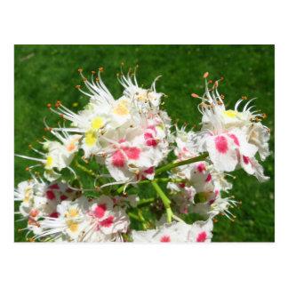 Rosskastanie-Baum-Blumen-Postkarte Postkarte