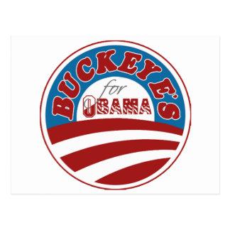 Rosskastanien für Obama Postkarte