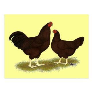 Rosskastanien-Hühner Postkarte