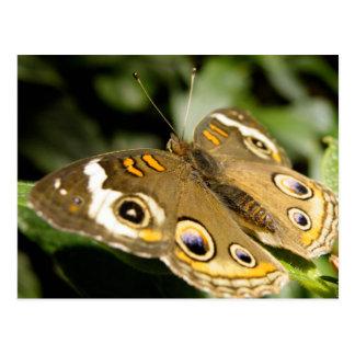 Rosskastanien-Schmetterling Postkarte
