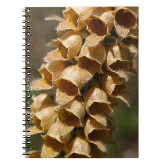 Rostige Fingerhut (Fingerhut ferruginea) Spiral Notizblock