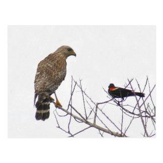 Rot angebundene Falke-Foto-Postkarte Postkarte