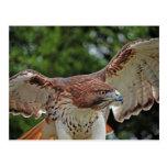 Rot-Angebundene Postkarte des Falken 2