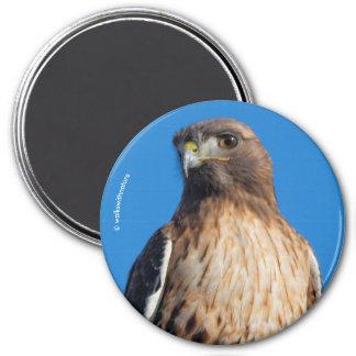 Rot-Angebundener Falke im Sun Runder Magnet 7,6 Cm