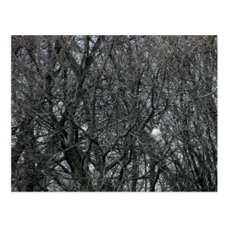 Rot angebundener Falke in vollem Winter Molt Postkarte