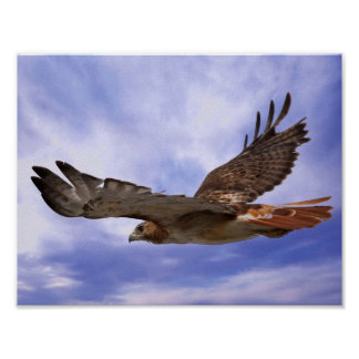 Rot angebundener Falke Poster