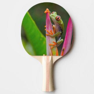 Rot-Auge Baumfrosch, Costa Rica 2 Tischtennis Schläger