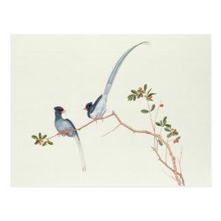 Rot-berechnete blaue Elster Beeren eines Niederla Postkarten