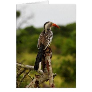 Rot-berechnete Hornbill-Vogel-Karte Karte