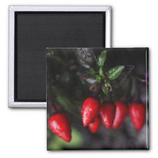 Rot - heiße Gartensalsa-Chili-Pfeffer Quadratischer Magnet