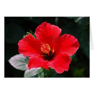 Rot - heißer Hibiskus-alles Gute zum Geburtstag Karte