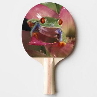 Rot-mit Augen Baumfrosch Agalychnis callidryas) Tischtennis Schläger
