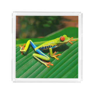 Rot-mit Augen Frosch Baum des tropischen Acryl Tablett