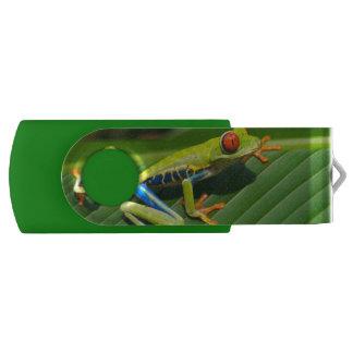 Rot-mit Augen Frosch Baum des tropischen USB Stick