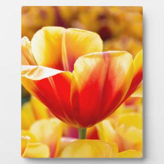 Rot mit gelber Tulpe auf dem Blumengebiet Fotoplatte