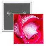 Rot/rosa Tau-Geküsste Rose Buttons
