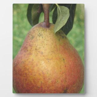 Rote Birne des Singles, die am Baum hängt Fotoplatte