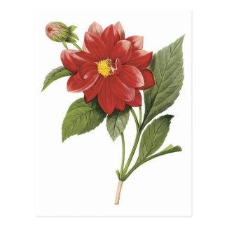 Rote Blume botanisches illistration; Doppelte Postkarte